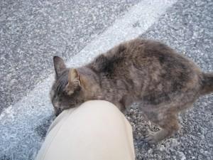 psichro cat1