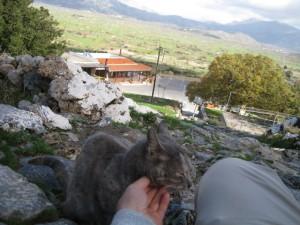 psichro cat2