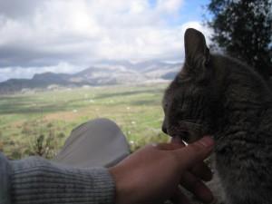 psichro cat3