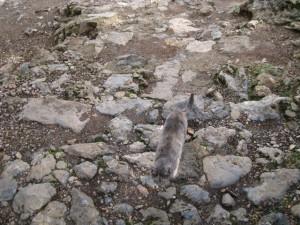 psichro cat4